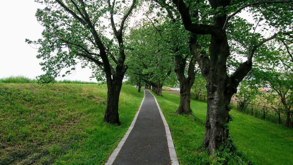 中浦和〜秋ヶ瀬公園4.1キロ「鴨川堤桜通り公園ルート」を走ってきた