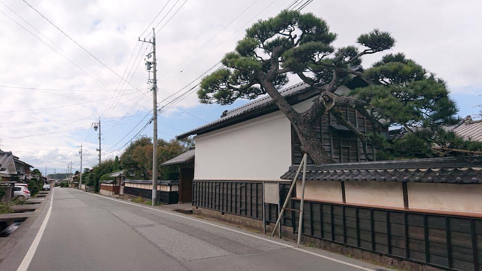 江戸の面影を残す建物と松の大木