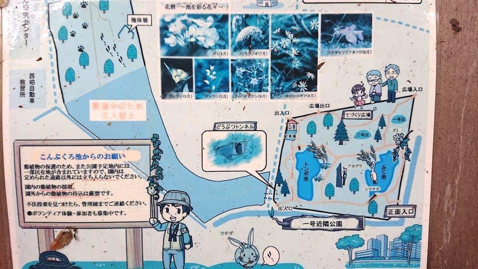 こんぶくろ池自然博物公園 案内マップ