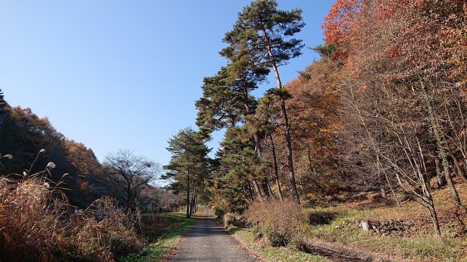 笠取峠の松並木