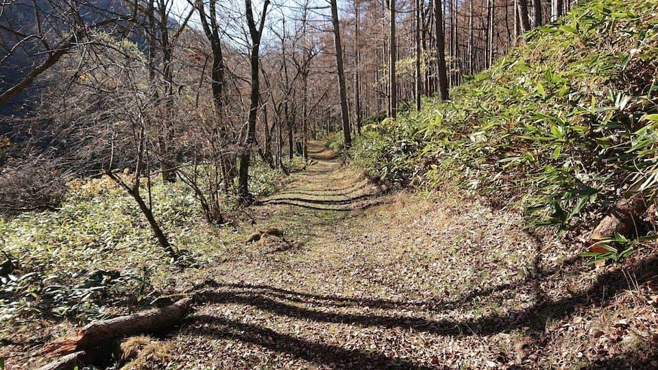 和田峠の山道