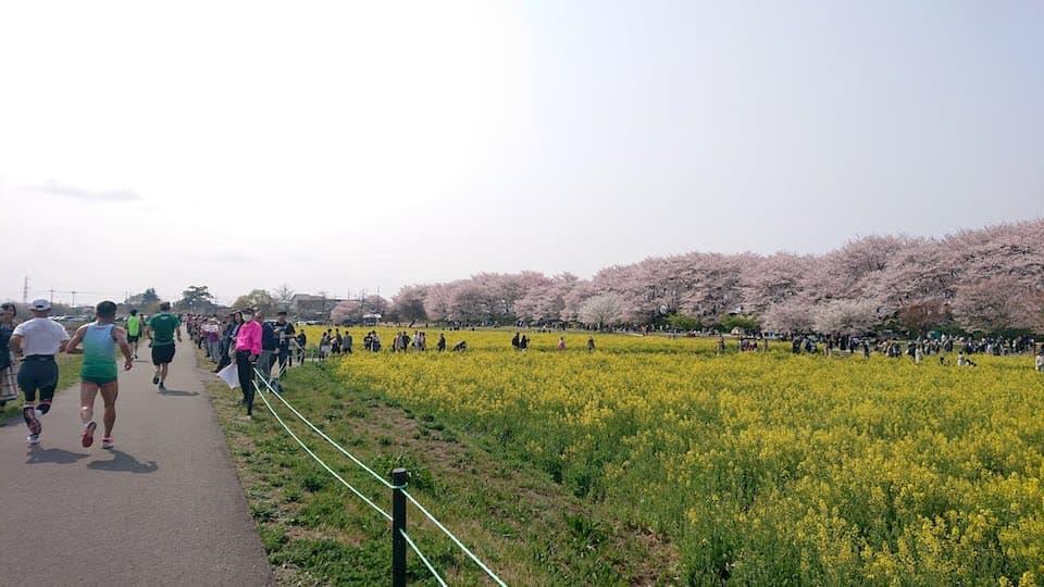 週刊ともらん:2019年最高のお花見ラン