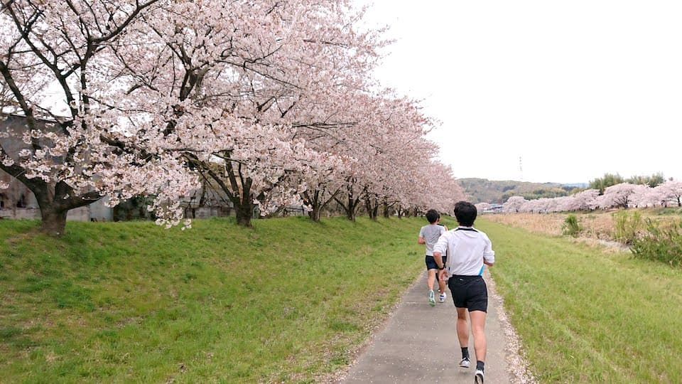 本庄早稲田の杜ハーフマラソン【ブログレポート】こだま千本桜のお花見ラン